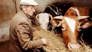 Augustin Navrátil na snímku z 29. ledna 1995, kdy držel hladovku za dokončení restituce církevního majetku. Foto: ČTK/Igor Šefr