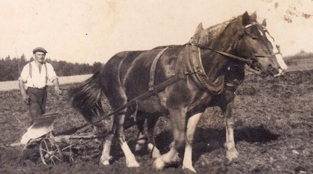 Bedřich Hanauer starší při práci na poli, zdroj: Soukromý archiv Bedřicha Hanauera ml.