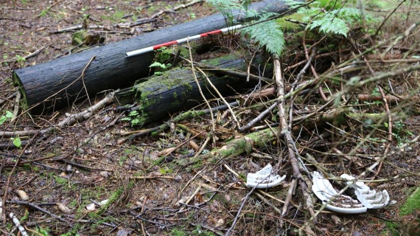 Vyvrácené sloupy, které nesly ostnaté dráty z ohrazení tábora Nikolaj, je dodnes možno nalézt na místě. Foto: Pavel Vařeka