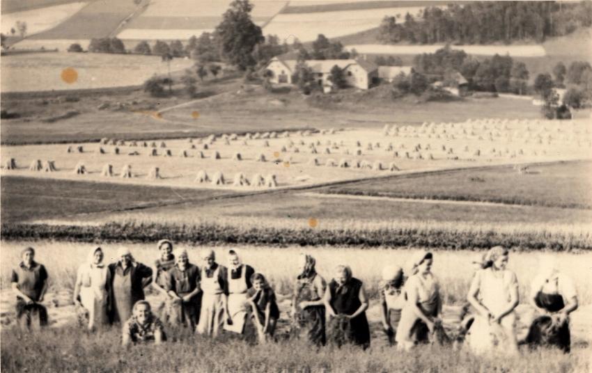 Sklizeň obilí, kontrola z Ministerstva státní kontroly u Lamplotových, 1953 (Archiv Antonína Lamplota) – z karty pamětníka Antonína Lamplota