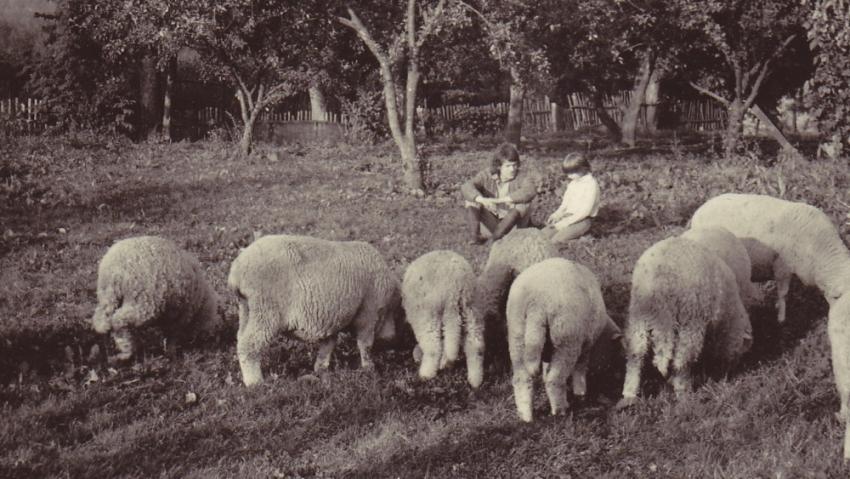 Jan Princ pase ovce v Mastířovicích. Foto: Paměť národa