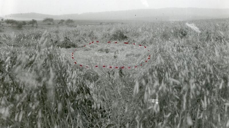 Žitné pole u Bolíkovic, kde byl zabit bratr Antonín Plichta, zdroj: ABS, N2/1, i. č. 16