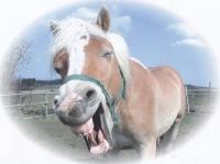 Gustav's favourite horse