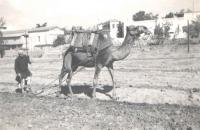 Typický palestinský venkovan s pluhem