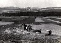 Pole patřící ke statku rodiny Davídkových (na fotografii otec a matka pamětníka)
