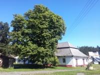 Sklárny Tasice - dvě stě let starý kaštan a vedle Panský dům, kde Libuše Trpišovská strávila takřka třicet let