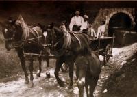 Manžel Marie Veselé s vlastními koňmi, na které byl velmi pyšný