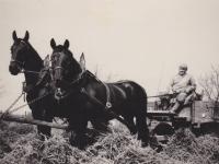 Bedřich Hanauer starší ve Frýdlanstkém výběžku na Státním statku v Andělce, kde pracoval jako kočí