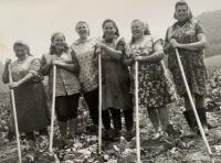 pamätníčka Paulína Dubeňová na prácach na poli (tretia zprava)