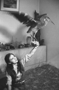 Věra Jirousová a volavka, kterou našla zraněnou a zachránila jí život, druhá polovina 60. let