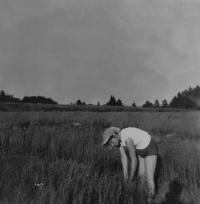 Jarmila Valouchová (Pospíšilová) při trhání lnu v osadě Na Horách