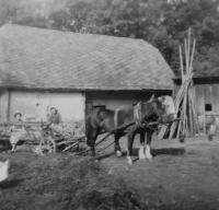 Na rodinném hospodářství v Olšanech