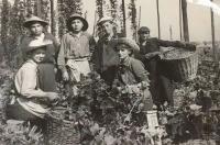 Na chmelové brigádě v roce 1953