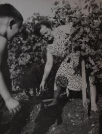 Maminka Růžena Hanáková při práci ve vinohradě (1968)
