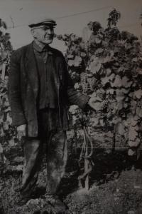 Tatínek Jan Hanák ve vinohradě