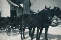 Šimonovi koně před statkem, 1944