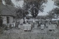 Vladimír Ficek and his bees, Semiduby 1932