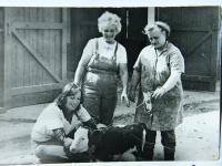 Při práci v JZD Bykoš, 70. léta