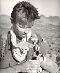 V alžírském pohoří Tassíli s mládětem fenka berberského