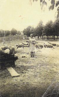 Doris při pasení ovcí v Terezíně, 1943