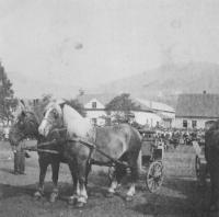 Koně na výstavě ve Kdyni, 1942