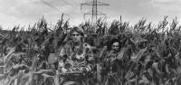 Ospald a Pohl v kukuřičném poli u hranic