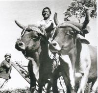 Kuba cca 1962