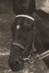 Kůň God, Pohořelec 1954
