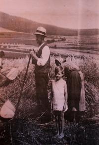 Sklizeň obilí, vlevo Vlastin otec, Vlasta; okolí Úboče, 1934 nebo 1935
