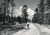 V Krkonoších - 80. léta
