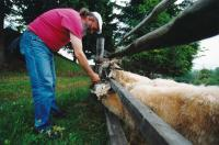 Čestmír Klos v Beskydech - rok 2000