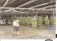 Banánovníkové plantáže v Kolumbii