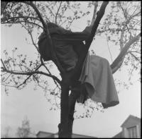 Petr Štembera – Spaní na stromě, 1975, záznam z vystoupení, dobová fotografie