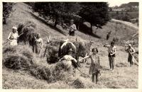 Hospodaření na pasekách v Růžďce / 50. léta