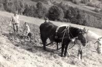 Sousedé Sedláčků na pasekách v Růždce / počátek 60. let