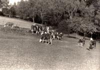 Na pastvině v Růžďce / počátek 60. let