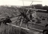 Manželka Jana Sedláčka Marie na polním stroji zvaném samovaz / 1967