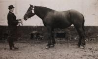 Jitky otec koněm