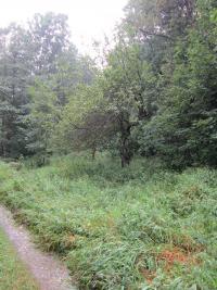 Ovocné stromy v zaniklé osadě Růženec (Rosenkranz) v roce 2014