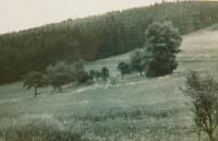 Místo kde stával dům rodiny Fischerovy na Růženci foceno v 50. letech minulého století