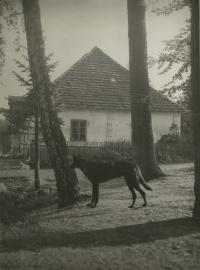 hájovna OBORA 1943 směrem od Pošné