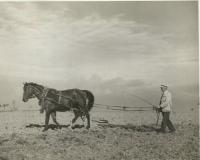 Osvald Rerych vláčí s koňmi 1943