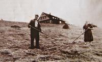 Rodiče suší seno pod novou Štumpovkou, kolem roku 1960