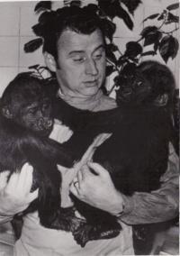 Josef Koutecký s gorilami z pražské ZOO