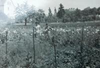 Na pozemcích rodiny Holátkovi v Šumperku