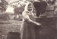 1944 - Jenovefa při vinobraní v Nechorách (areál vinných sklepů)