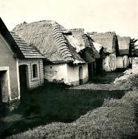 1942 - Nechory, vesnice vinných sklepů