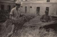 Ladislav Lašek - shedding of hay in village of Vinná