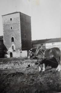 Family estate in Lošany before confiscation