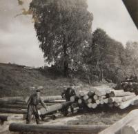Josef Hocz v zaměstnání na pile v Jeseníku